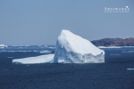 Large Iceberg Main Tickle