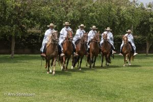 Peruvian Paso Horse parade