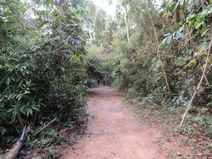 rainforest walk 3