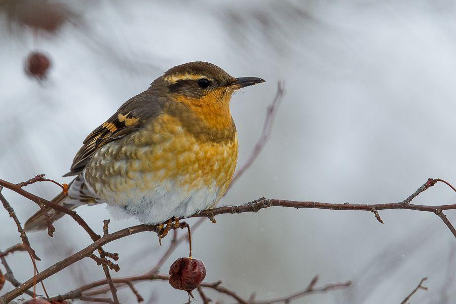 4 letter bird - aildoc.productoseb.co