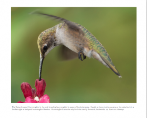 October - Ruby-throated Hummingbird
