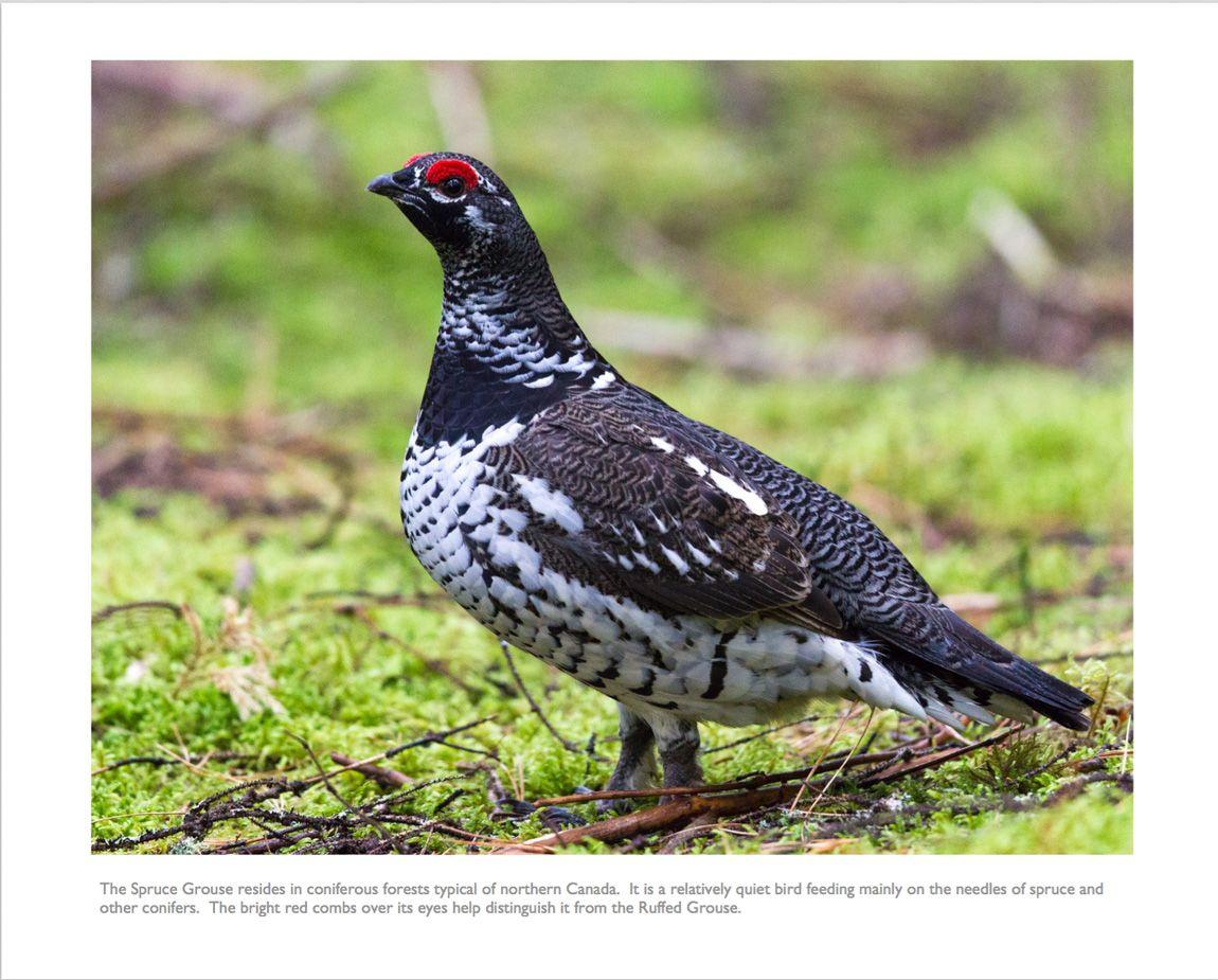 2016 birds of ontario calendar